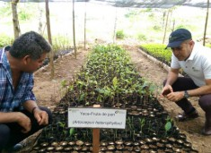 iberdrola-reforestacion-oaxaca